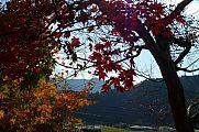 japan2012_slavo_20121119_p1020523777.jpg: 217k (2012-11-19 13:53)
