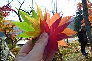 japan2012_slavo_20121119_p1020527778.jpg: 125k (2012-11-19 14:04)