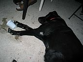 2009-09-05_mitterovci_2009_img_6772.jpg: 118k (2009-09-05 23:10)