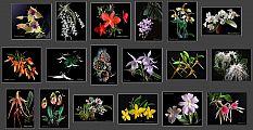 terragalleria_com_orchids.jpg: 98k (2012-12-24 20:41)