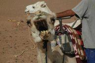 jv_maroko_kartacek_na_zuby.jpg: 61k (2011-10-27 16:51)