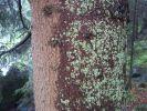 ifonita2002_0042.jpg: 199k (2010-07-11 21:26)