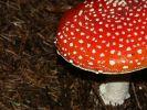 ifonita2002_0046.jpg: 107k (2010-07-11 21:26)