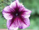 ifonita2002_0227.jpg: 103k (2010-07-11 21:26)