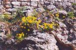 Flóra na nádvorí