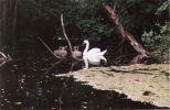 Heš husičky - pardon labútence - heš do vody. Ide hodina plávania.